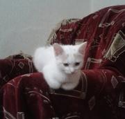 продам милого котенка